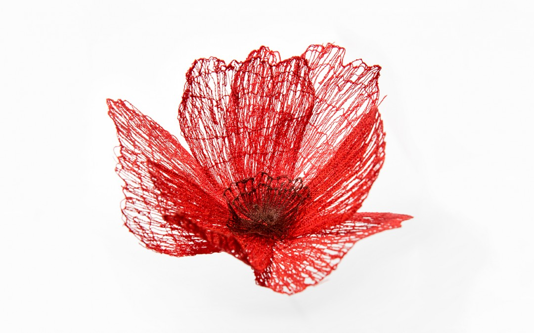 Studio: Poppies